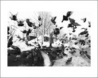 """#7. София 2016, цикъл """"Тя"""" пигментен отпечатък, 40 x 50 см, рамка цена: 120лв"""