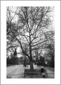 """#14. София, 2016, цикъл """"Тя"""" пигментен отпечатък, 70 x 50 см., рамка цена: 220лв"""